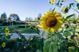 Jehay, les jardins au fil des saisons – Province de Liège ©