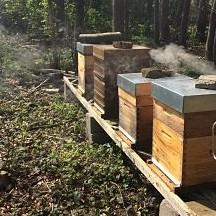 Nos ruches sur le site du Château de Jehay