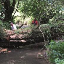 Ruisseau d'Asse