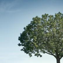 Exercice de l'arbre