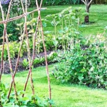 Exemple 2 d'un jardin collectif