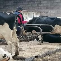 Signes de vaches