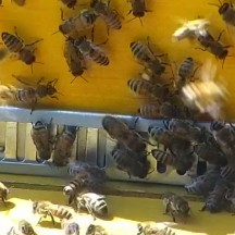 Activité devant la ruche