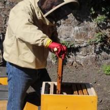 Travail de l'apiculteur