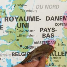 Etude des oiseaux