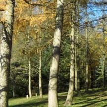 L'arboretum1