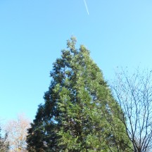 L'arboretum 4
