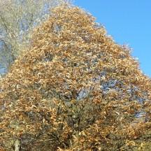 L'arboretum 2