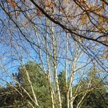 L'arboretum 3