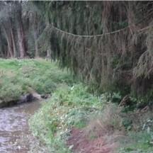 Ruisseau le Bach - Stabilisation de berge naturelle intégrée