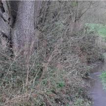 Ruisseau de Fierain - Remise à gabarit du lit après travaux