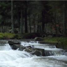 Ruisseau le Grumont - Passe à poisson en période de crue