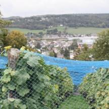 M. Dupont - Viticulteur à Amay - 15 octobre 2013