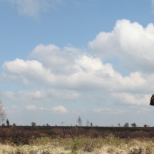 La fagne incendiée-Baraque Michel-Signal de Botrange-3 mai 2010
