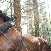 Débardage en forêt-Louveigné 7 mai 2013