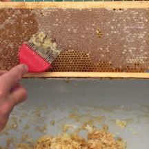 Recueil et transformation des produits de la ruche