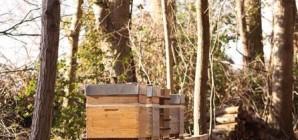 Miellerie mobile : Un nouveau rucher didactique à Jehay