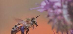 """Nous avons aimé... """"Le monde extraordinaire des abeilles"""""""