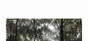 Nous avons aimé... Forêt de Hambach... / Marc Wendelski