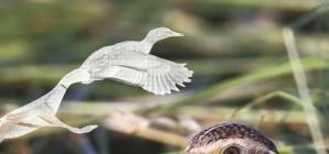 Nous avons aimé... Oiseaux de chez nous / d'André Burnel