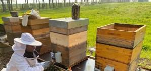 Des ruches connectées : La technologie pour aider les apiculteurs