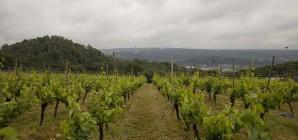 Lancement du projet EMRWINE : préparer la viticulture de demain