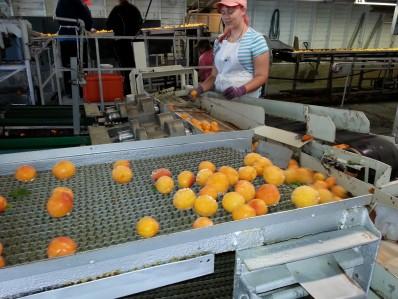 Lavage de fruits