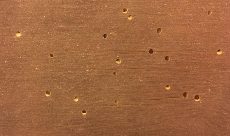 Détail de trous d'envol visibles sur un objet de la collection avant traitement. La sciure de bois apparaît clairement à l'intérieur des cavités.
